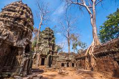 Tree in Ta Phrom, Angkor Wat, Cambodia. - stock photo