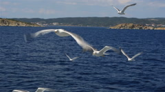 Seagulls flying over the sea. Stock Footage
