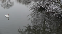 Winter scene with swan Stock Footage