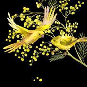 Watercolor Background of Mimosa, Yellow Bird - stock illustration