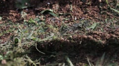 Footage of an ant colony Stock Footage