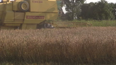 Yellow modern combine harvest wheat grain field in summer Stock Footage