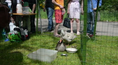 Students excursion watch of farm grown ducks and geese in cage Stock Footage