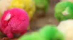 Lovely colorful bright painted chicks Stock Footage