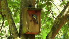 Great tit (parus major) arriving at nesting box Stock Footage