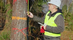 Forest engineer with a tablet PC and tape measure near tree in forest - stock footage