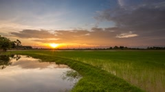 Sunset time lapse at a paddy field Stock Footage