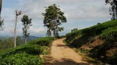 Pan from a tea plantation road to tea plantations Stock Footage