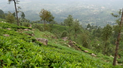 Pan from tea plantations mountain view landscape in Sri lanka Stock Footage