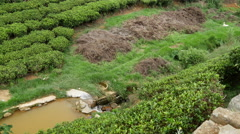 Pan from a river at a tea plantation to a village Stock Footage