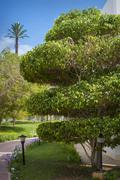 Stock Photo of trees in the park , beautiful park trees , formal garden