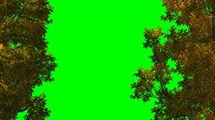Trees in Autumn - red leaves - Video Background - green screen - 4k Stock Footage