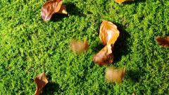 Fresh green pubescence with falling leaves. Stock Footage