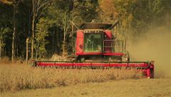Combine Harvesting Soybeans - stock footage