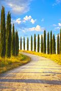 Tuscany, cypress trees white road rural landscape, italy, europe. Stock Photos