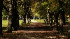 4K Autumn Road under Deciduous Trees 1 Stock Footage