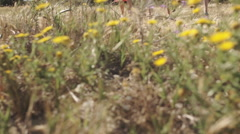 Dolly shot of family walking through flower meadow in countryside. Stock Footage