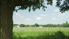 Field and a tree on an English summer day Stock Footage