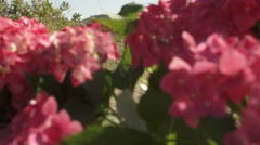 Slow motion dolly shot of family running past camera with purple flowers in Stock Footage