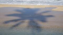 Coconut palm shadow, ehukai beach, pipeline, north shore, oahu, hawaii Stock Footage
