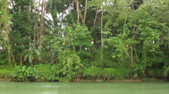 River jungle Stock Footage