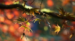 Leaves, Fall, Autumn, Foliage, 4K, UHD - stock footage