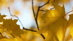 Autumn Leaves and Fall Foliage Stock Footage