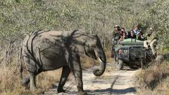 Tourists on safari vehicle watching elephants crossing the road, South Africa Stock Footage