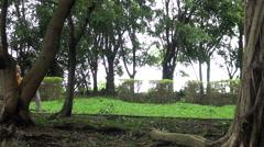 Monk walking in Daan park Taipei, Taiwan -Dan Stock Footage