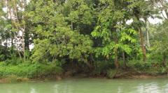 Asian jungle in the rain Stock Footage