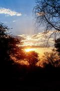 African sunset with tree in front Stock Photos