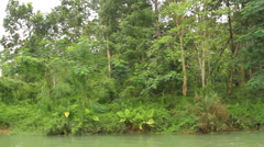 Tropical forest - stock footage