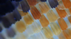 Butterfly wings. Sequence. Macro Stock Footage