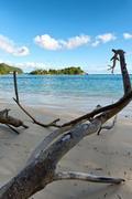Driftwood on south beach, port launay Stock Photos