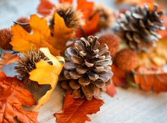 Close up of pinecone amongst autumn leaves Stock Photos