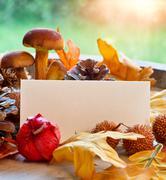 blank note amongst autumn foliage - stock photo