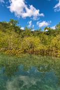 coastal mangrove swamp off mahe, seychelles - stock photo