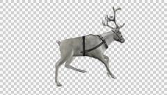 Reindeer - Sleigh - White - Silver Antlers - Side Angle - Run Loop - Alpha Stock Footage