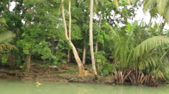 Tropical River Jungle Stock Footage