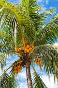 Low angle view of coconut palm tree Stock Photos