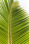 fresh look green beach palm leaves - stock photo