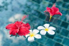 plumeria and hibiscus flowers floating on water - stock photo