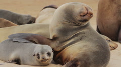 Seals at Cape Cross Stock Footage