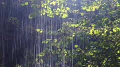 forest rain - stock footage