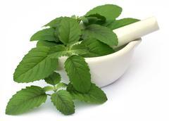 Medicinal holy basil or tulsi leaves Stock Photos