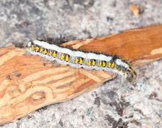 Caterpillar in nature. close-up Stock Photos