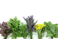 Bunch of fresh herbs on white background Stock Photos
