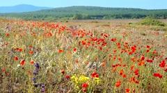 Wild meadow in bloom Stock Footage