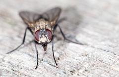 fly. close-up - stock photo