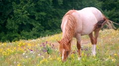 grazing in peace - stock footage
